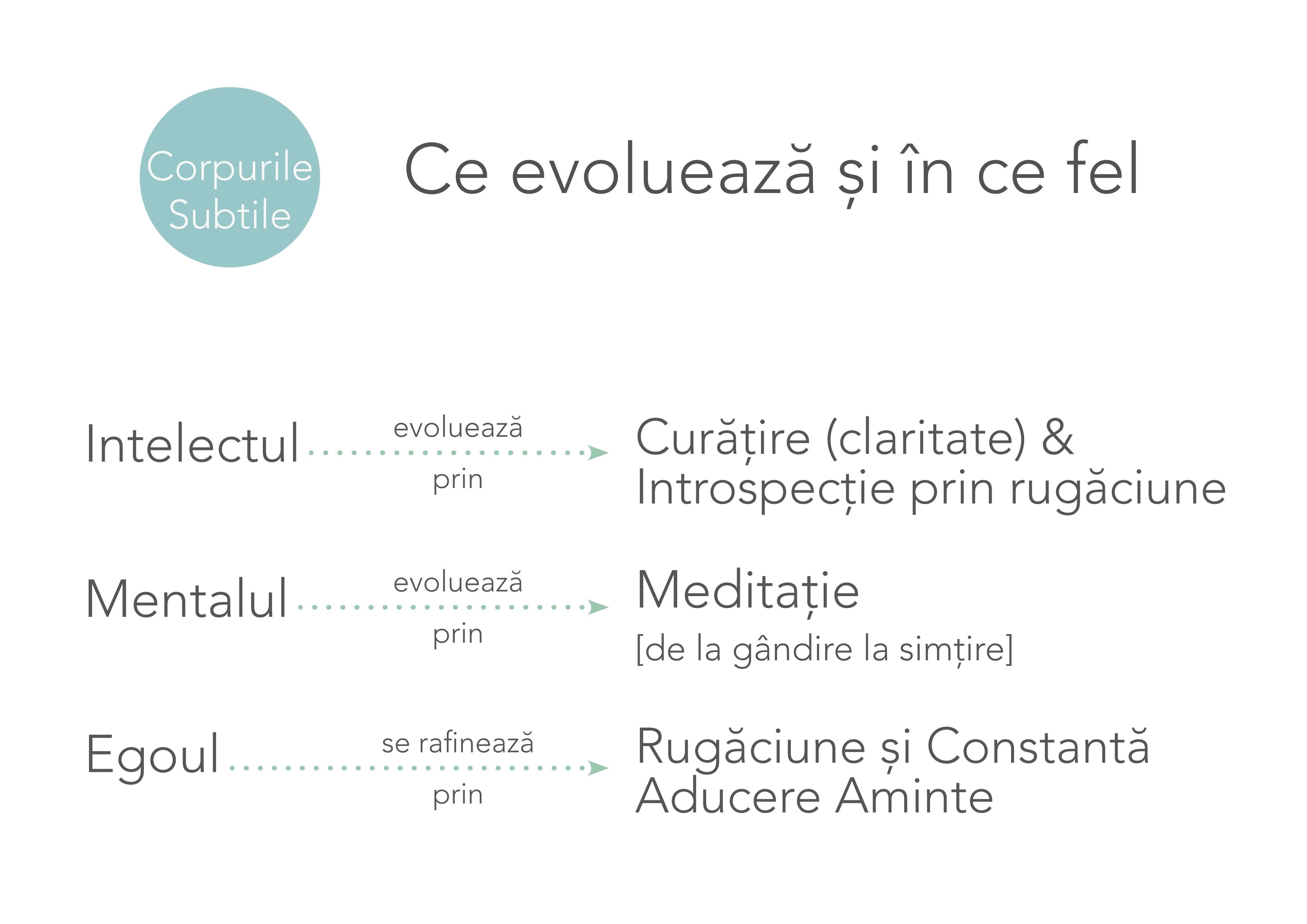 Evoluția Conștiinței